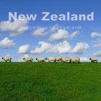 เรียนต่อนิวซีแลนด์
